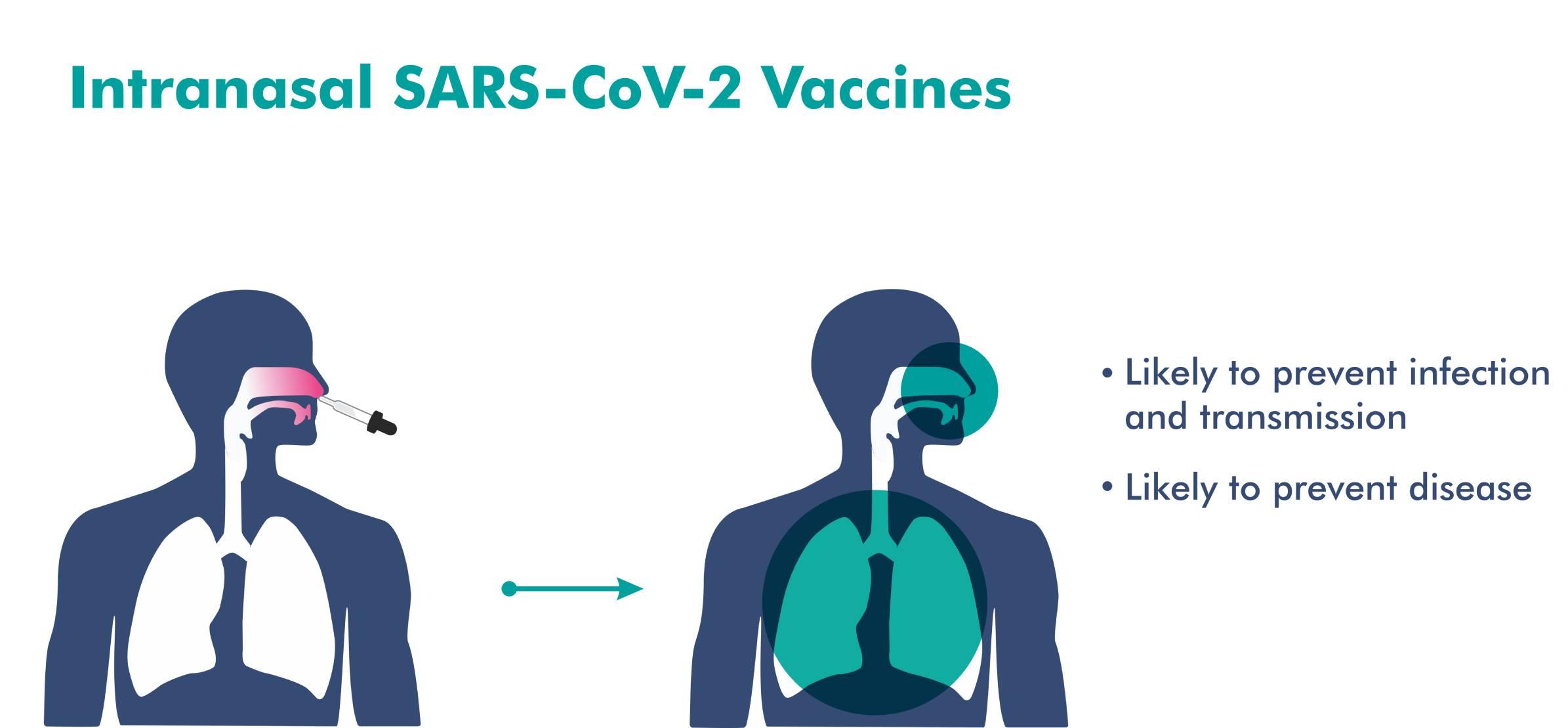https://www.bharatbiotech.com/images/intransal-covid-vaccine.jpg